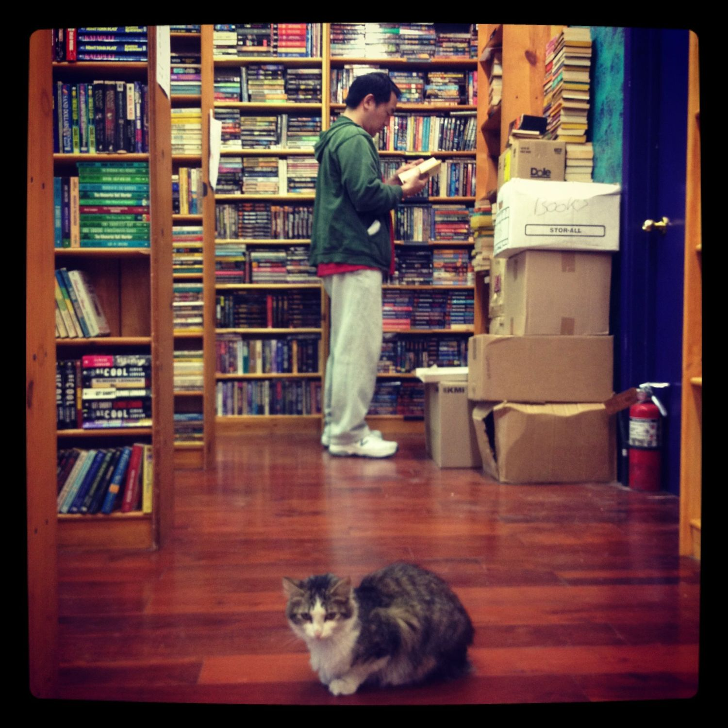 Man in bookstore, with cat, thinking about editing.